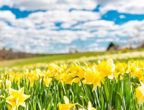 Frühling und Sommer in Massachusetts