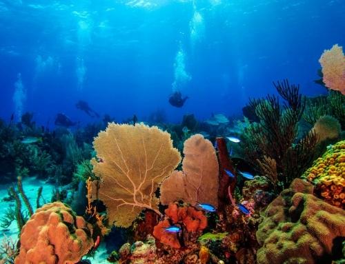 Eintauchen in die Unterwasserwelt von Rhode Island