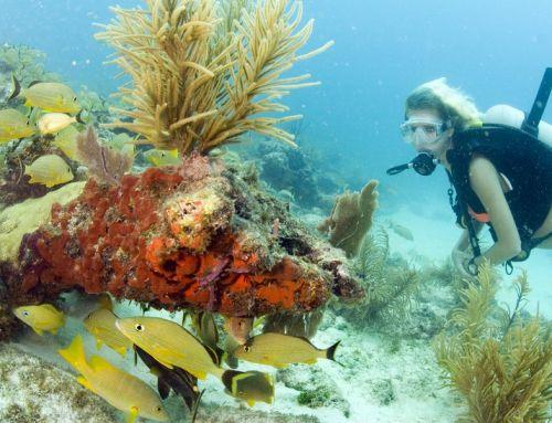 Auf Tauchstation im Florida Keys National Marine Sanctuary