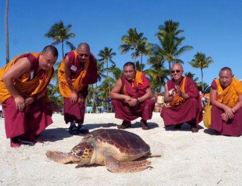 Sieben Mönche und eine Meeresschildkröte