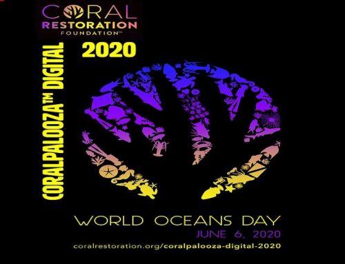 Zum Weltmeerestag: Digitales Coralpalooza in den Florida Keys