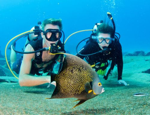 Cayman Islands Insider-Webinar zum Thema Tauchen